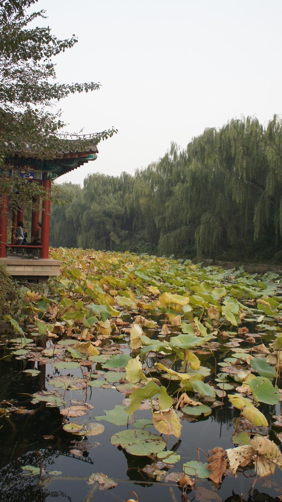 清华大学近春园:朱自清笔下的荷塘秋色 - 余昌国 - 我的博客