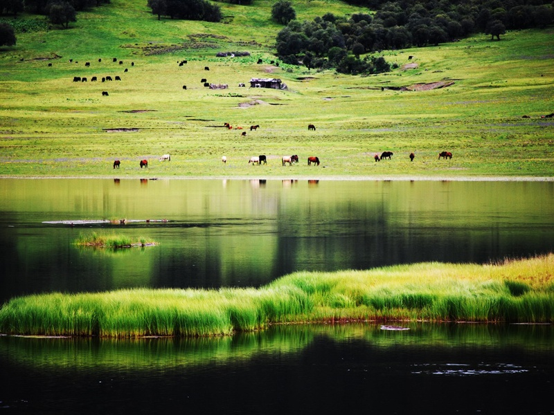 香格里拉:令人沉醉的普达措国家公园 - 余昌国 - 我的博客