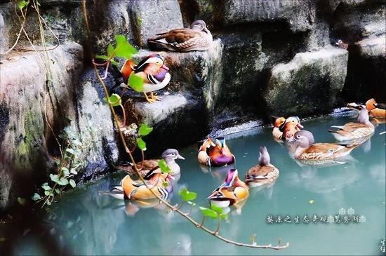【凌波园原创诗韵】游鸳鸯湖  (古风) - 凌波微步 - 凌波微步的诗意梦圆之原创博客