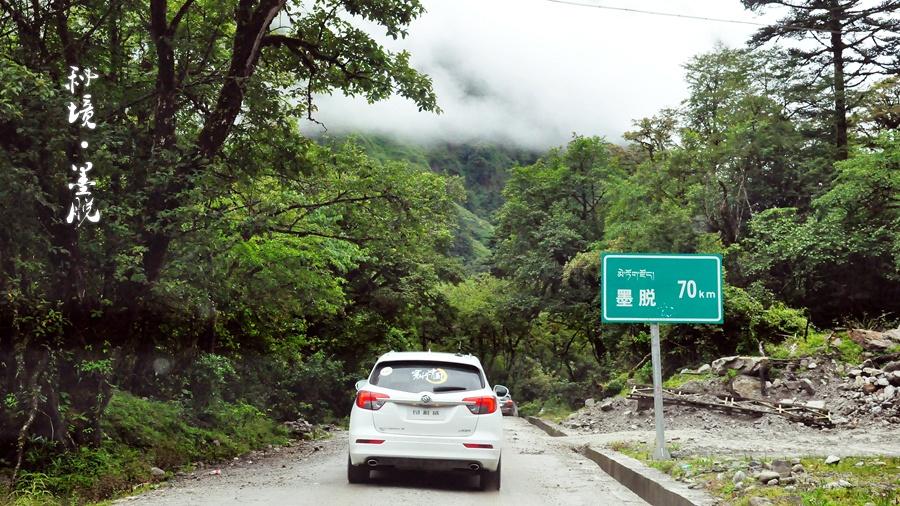 高大的松树如同卫士般挺拔的驻守在公路两侧.