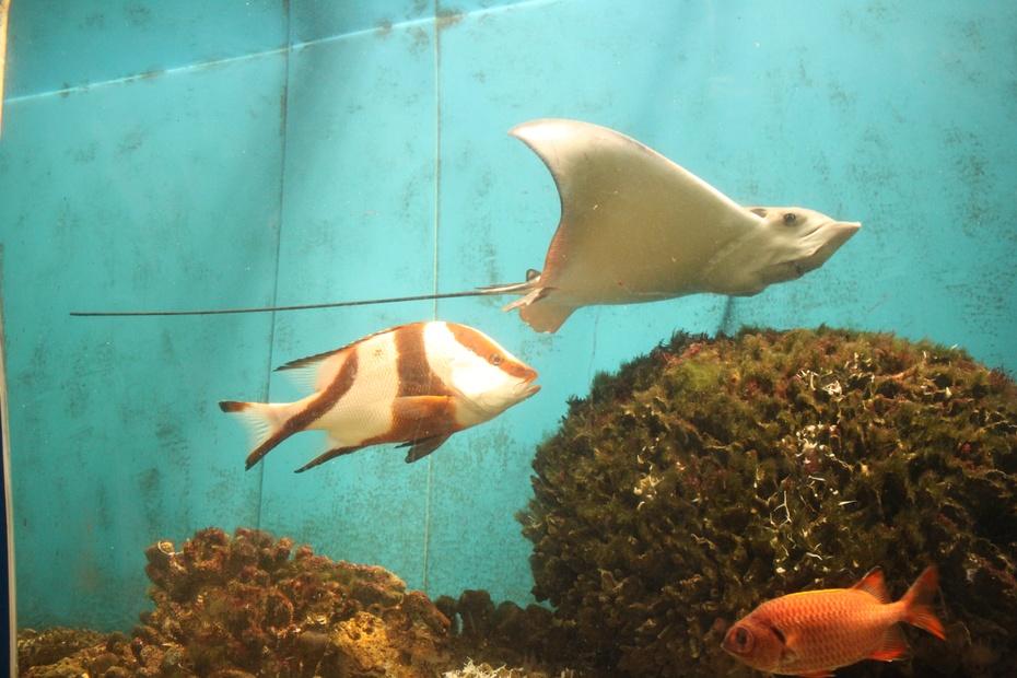 壁纸 动物 海底 海底世界 海洋馆 水族馆 鱼 鱼类 930_620
