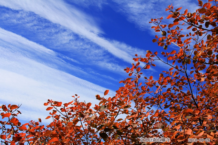 千年古刹红螺寺深秋风光 - 林中鸟 - 林中鸟的博客 欢迎朋友光临