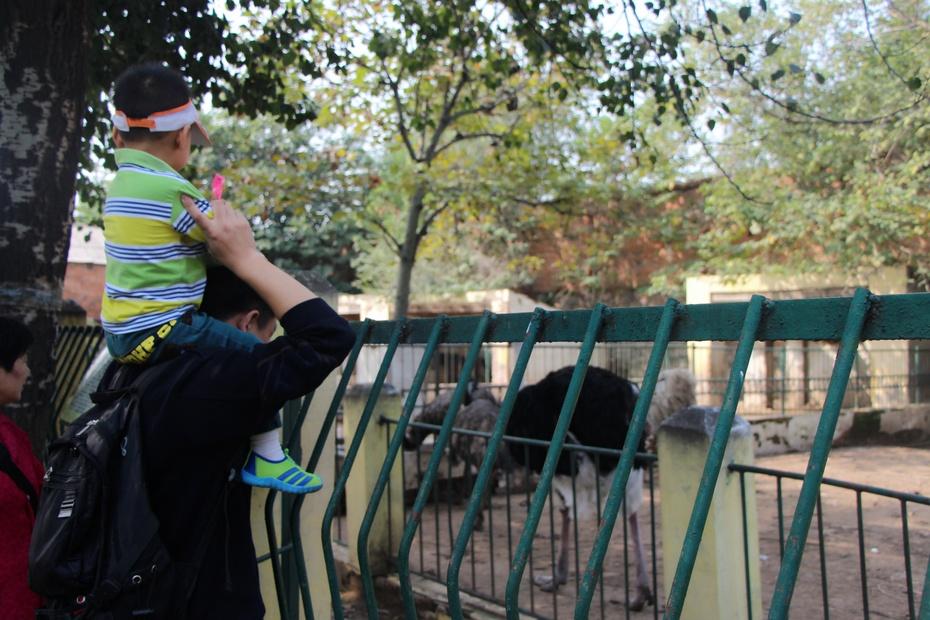 开封汴京公园里的小动物