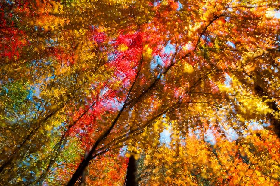 本溪:关门山国家森林公园赏红叶