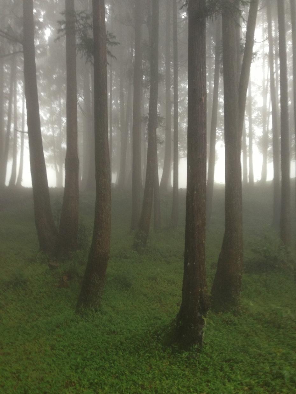 雨雾大容山 桂东南仙境 - 余昌国 - 我的博客