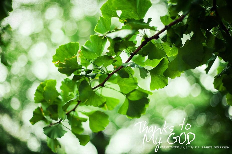 绿色叶子飘落素材大全