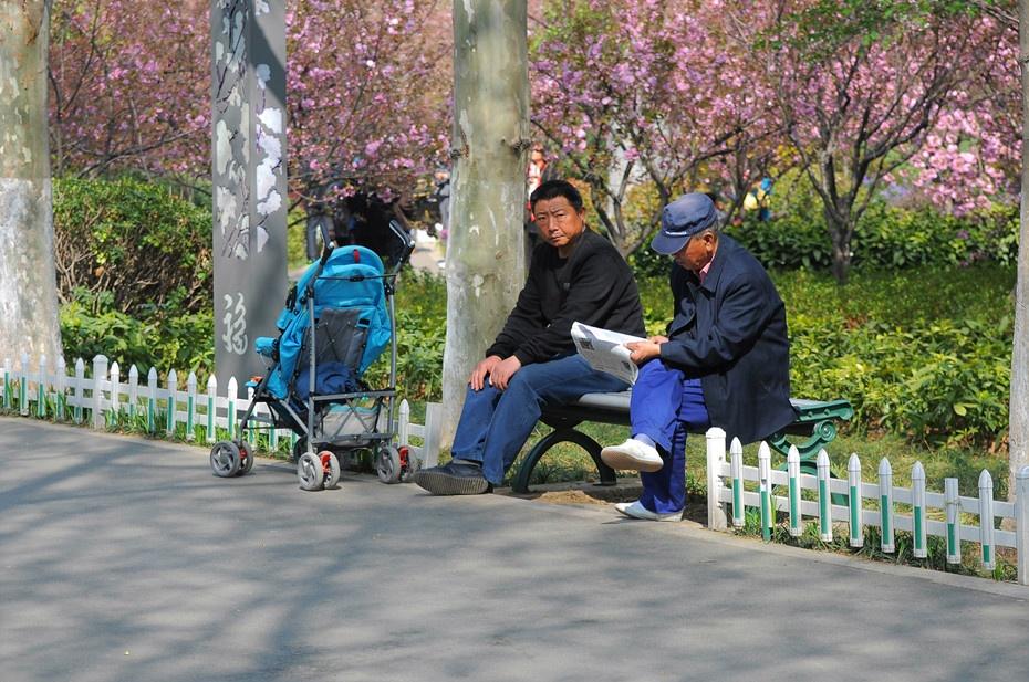 樱花 樱花节花絮(一) - 菊香的博客 - 菊香的博客