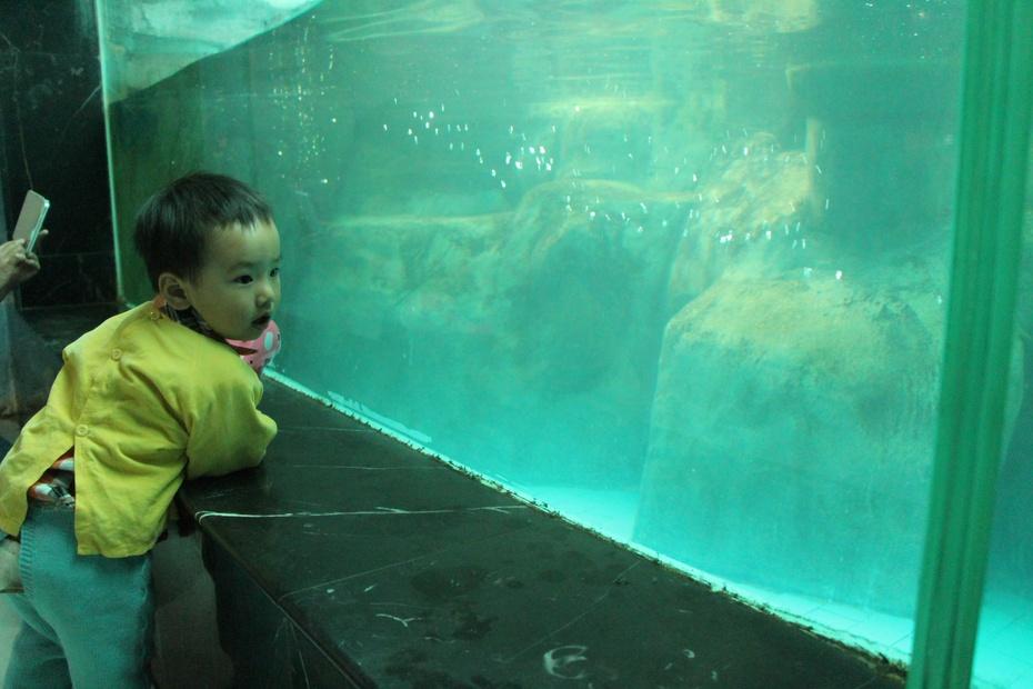 带乐乐游郑州----郑州动物园(猴子和海洋馆篇)