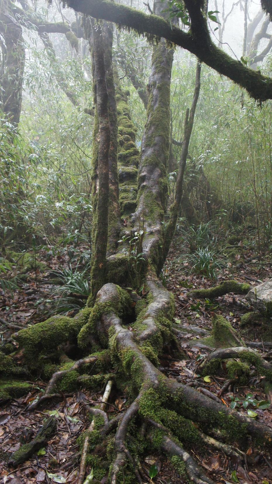 华南第一高峰:桂林猫儿山 - 余昌国 - 我的博客