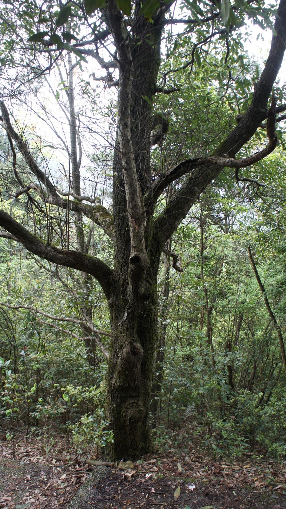 走进花坪保护区 感受自然原生态 - 余昌国 - 我的博客