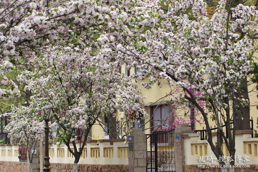 【最美五月】青岛八大关,遇见最美的春天