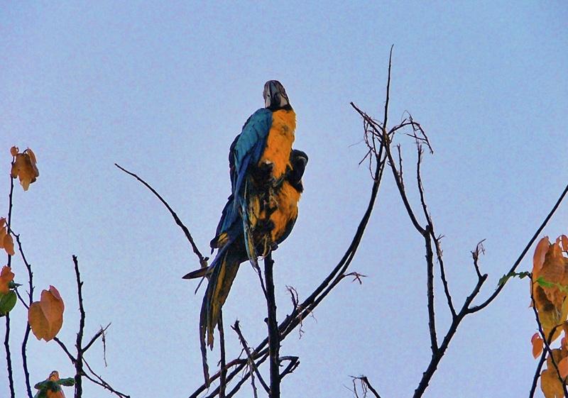神秘的亚马逊河热带雨林探险(二)危机四伏的密林湖