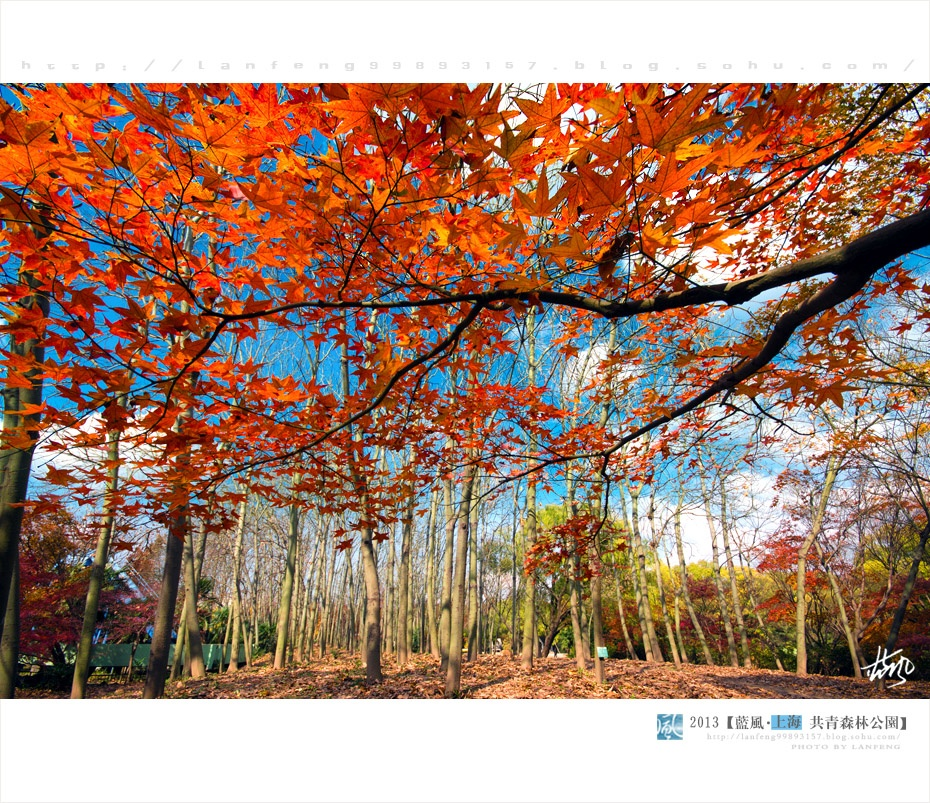 晴朗上海的初冬美景 - 蓝风 - 蓝风的博客
