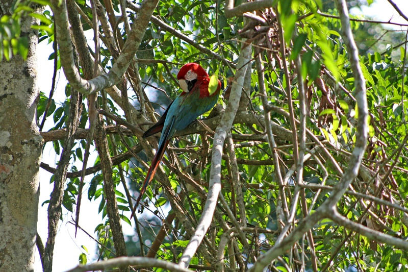 亚马逊河热带雨林探险(三)徒步走进密林探险