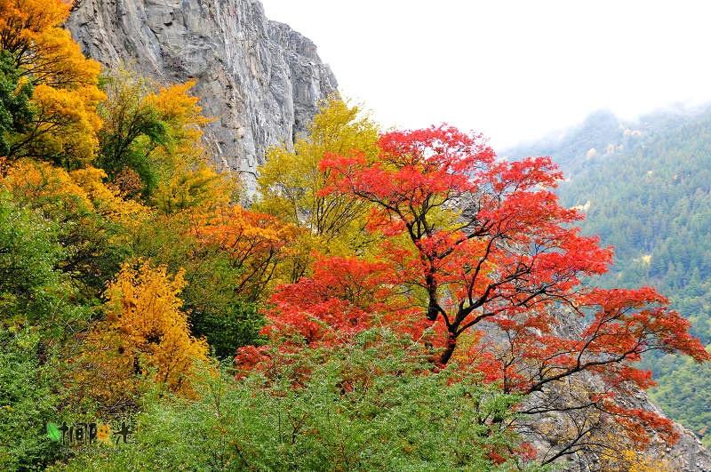 阿坝 秋---徜徉在野风景里 - H哥 - H哥的博客