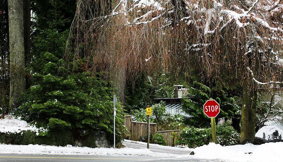 十年雪落_雪落温哥华-加拿大雁-搜狐博客