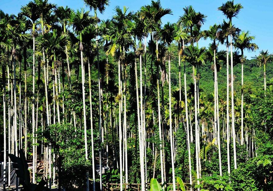 """三亚槟榔谷,海南黎家文化的""""活化石"""" - 海军航空兵 - 海军航空兵"""