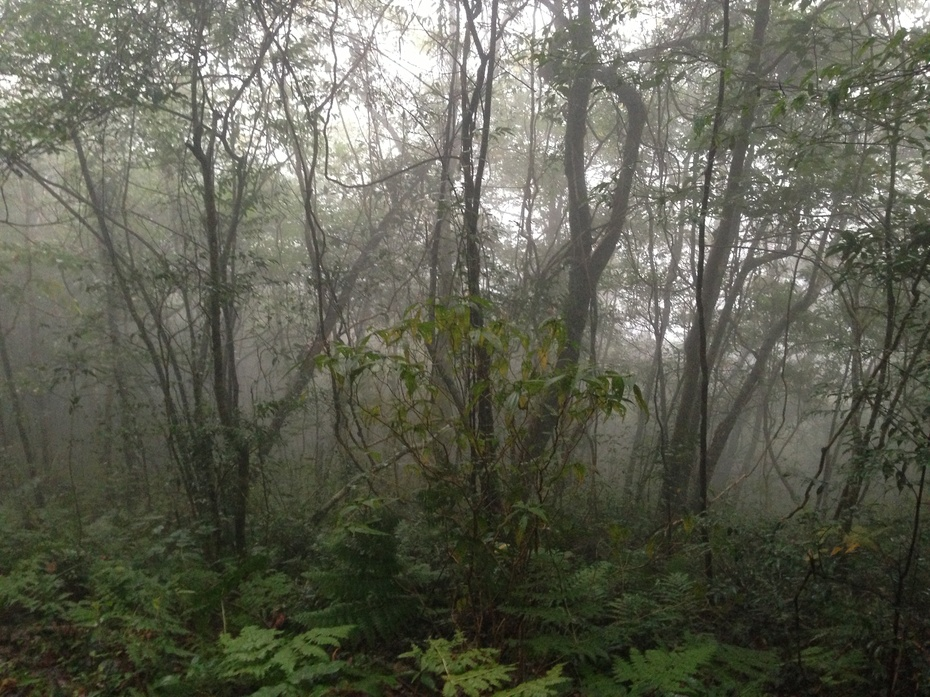 雨雾中感受桂中第一高峰圣堂山 - 余昌国 - 我的博客