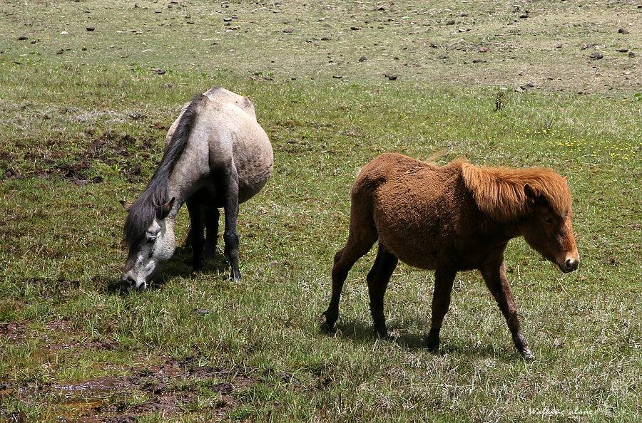 壁纸 草原 动物 马 骑马 桌面 900_594