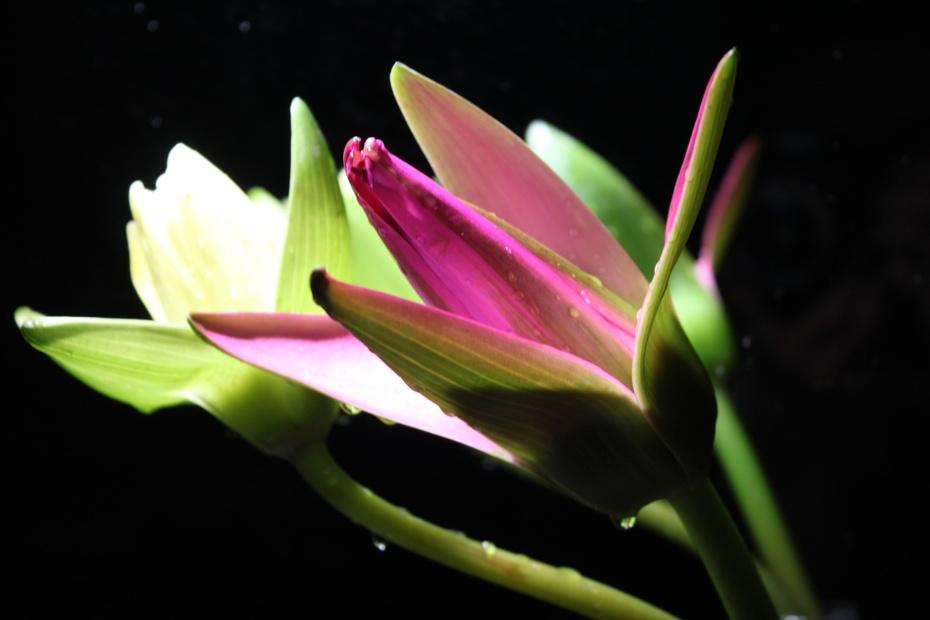 九品莲花 佛祖的馈赠
