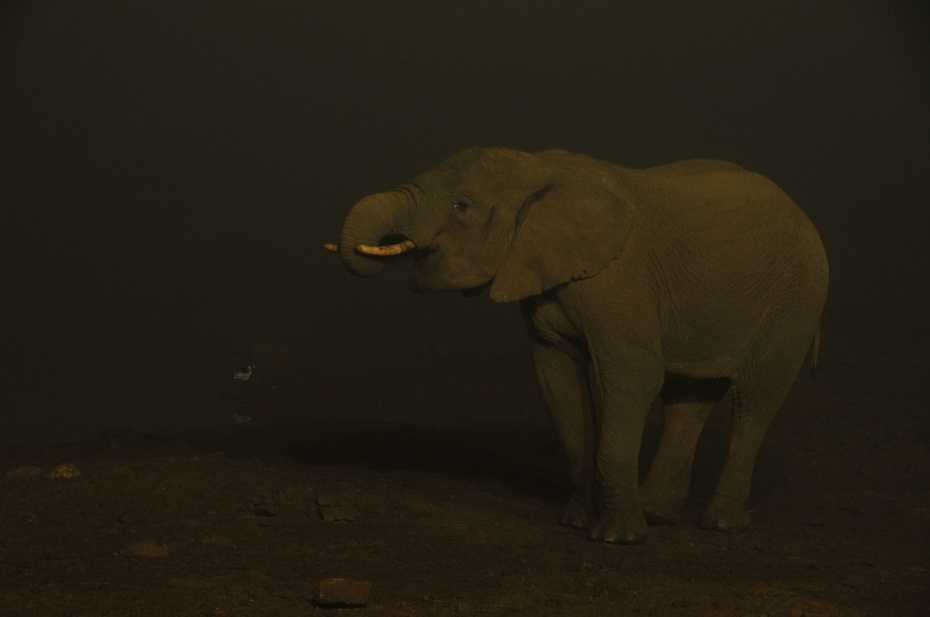 肯尼亚行摄 在树顶酒店看野生动物