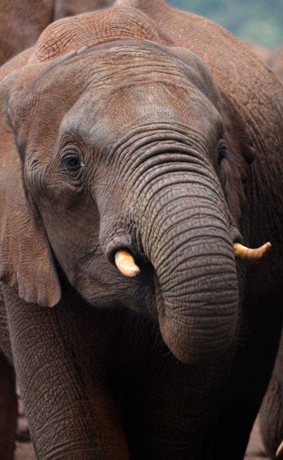 大象 动物 930_1512
