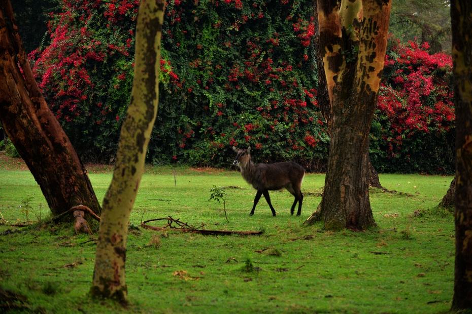 走进非洲大地上的童话世界肯尼亚 - 余昌国 - 我的博客