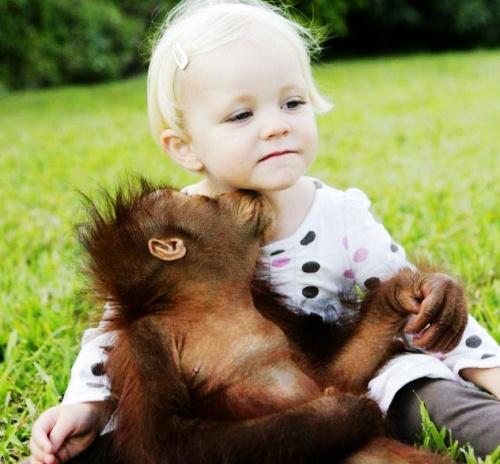 被遗弃小猩猩和小女孩温情相处 - 追真求恒 - 我的博客