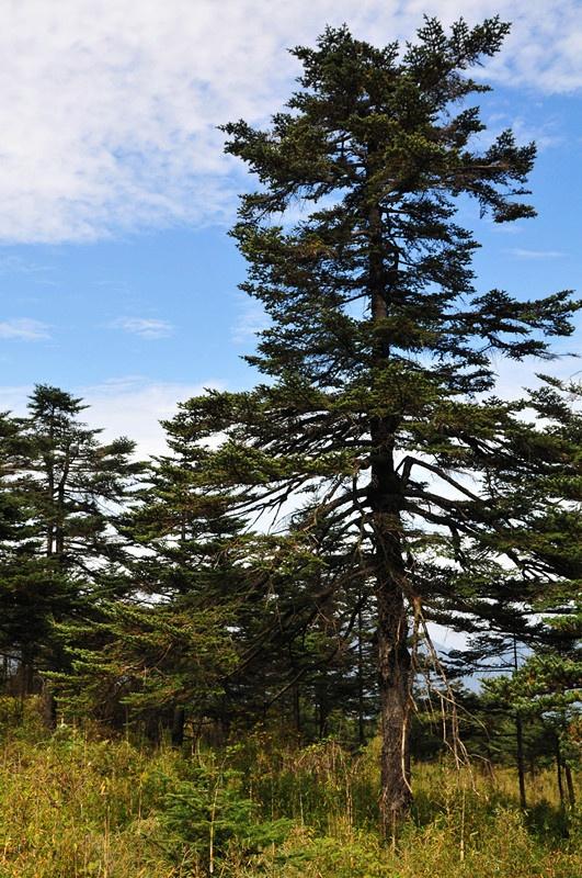 【小一】游原始森林神农架,探寻野人足迹~ - 小一 - 袁一诺vivian