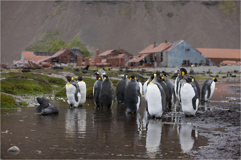 南极纪行之二  去南极,看笨鹅 - 恭敬礼拜 南无普净佛 - 呼吁立法 关闭网络游戏黄色书 提倡八正道