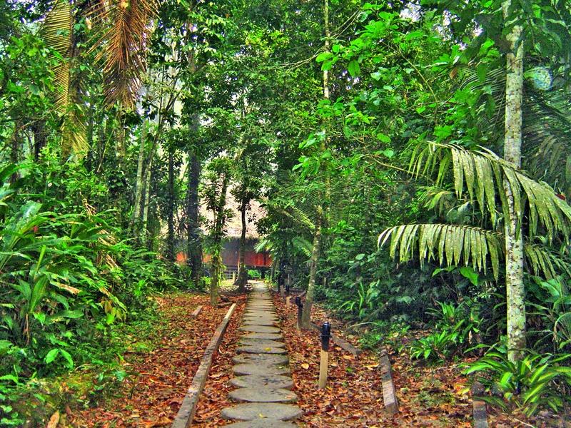 神秘的亚马逊河热带雨林探险(一)入住密林旅馆受到的