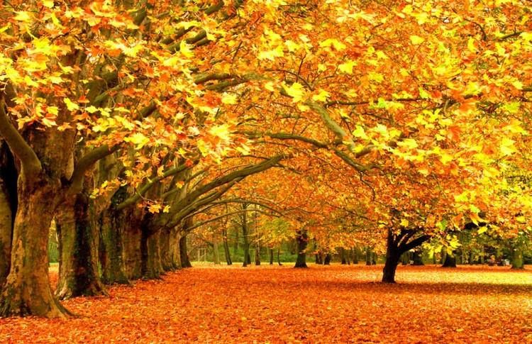 秋天的美 - 白雪 - 雪之吻