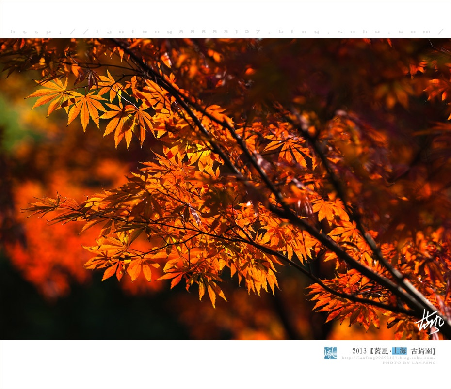 【上海秋色】占尽风情古猗园 - 蓝风 - 蓝风的图像家园