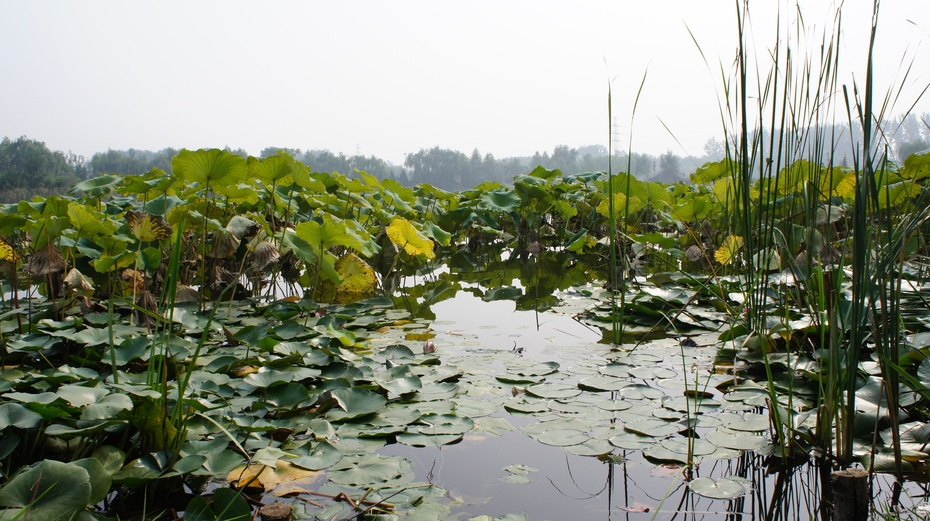 北京长沟湿地公园 - 余昌国 - 我的博客