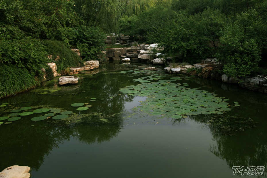 清晨——北京植物园 - 下午茶馨 - 下午茶馨展示页