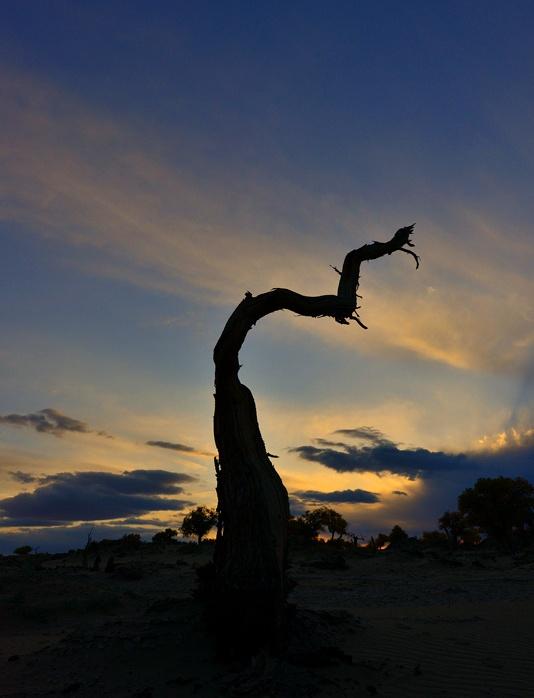 西部掠影—甘肃和内蒙(13)夕阳下枯而不倒的沙漠舞者(2) 2013年10月13日下午,我们就在这座怪树林里,一直拍到夕阳西下。天渐渐黑下来,看着那些千奇百怪的枯树的影子,阴森森的,还渗透出一股狰狞恐怖的气氛,心里有些害怕。就向着来时的方向,边咔嚓便往回走。此时,太阳又从云缝里露出了他的脸,其余晖映红了西边的天空,我忘记了害怕,忘情地拍着。忽然听到老伴呼喊我的声音,我的心才踏实了下来。我走到老伴身边,和老伴一起边往回走边拍。 傍晚,稀奇古怪的枯树剪影,我们嘁哩喀喳地拍了不少,快回到停车场时,又