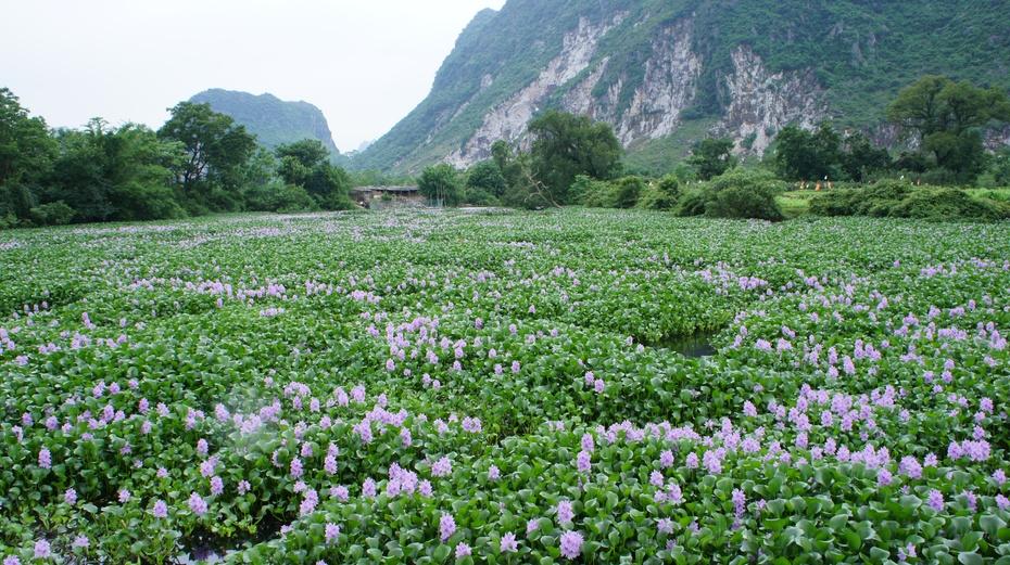 桂林郊区:山清水秀厄头村 - 余昌国 - 我的博客