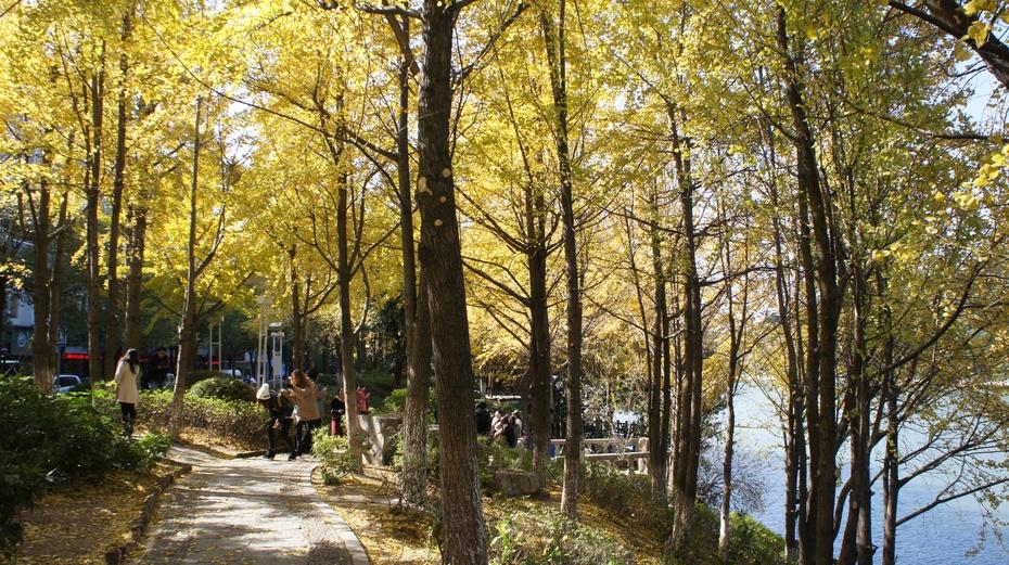桂林桂湖秋色惹人醉 - 余昌国 - 我的博客