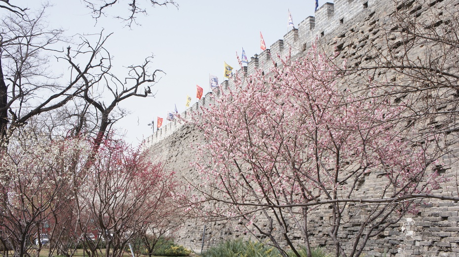 梅花绽放北京明城墙遗址公园 - 余昌国 - 我的博客