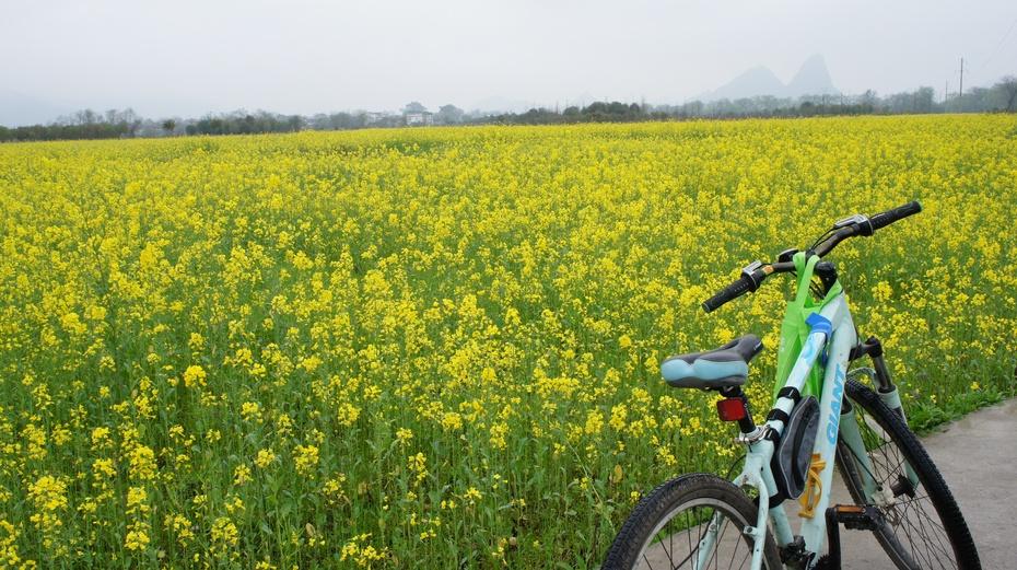 桂林兴安绿道花海中骑行 - 余昌国 - 我的博客