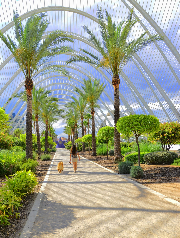 西班牙瓦伦西亚的梦幻建筑 - 余昌国 - 我的博客
