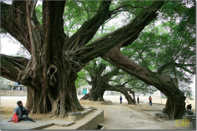 广西游记——古镇、梯田 - H哥 - H哥的博客