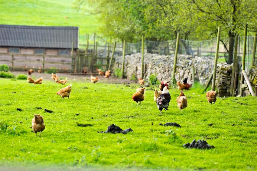 世外桃源般的英国农村 - 余昌国 - 我的博客