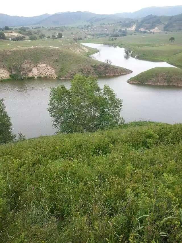夏日桦木沟 牛羊成群景 - 余昌国 - 我的博客