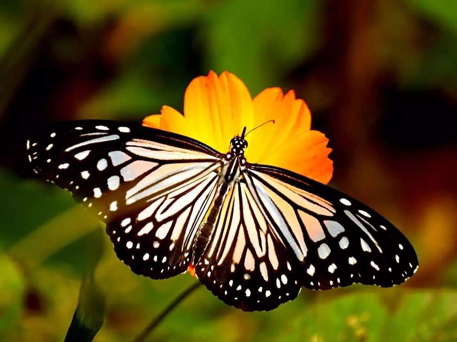 一位饭店总经理眼中的蝶与花 - 余昌国 - 我的博客