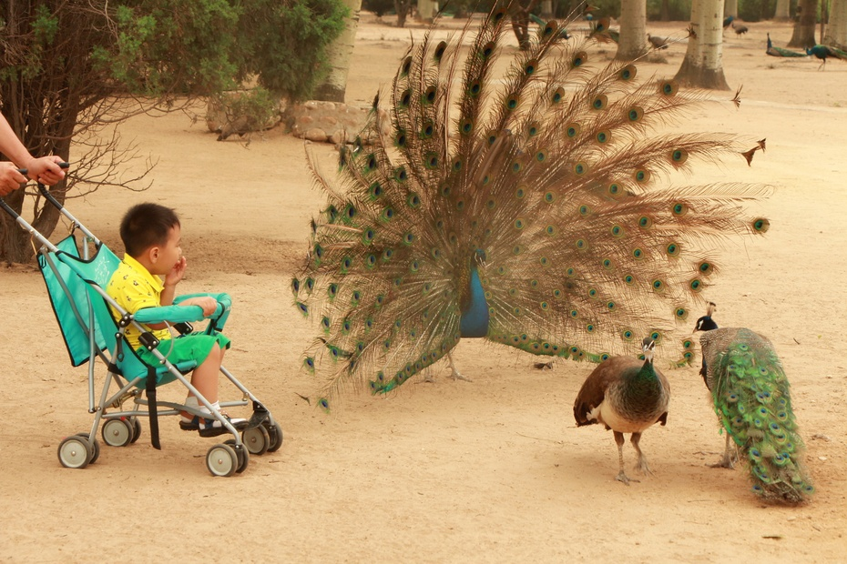 留恋于动物之间---秦皇岛野生动物园(下)