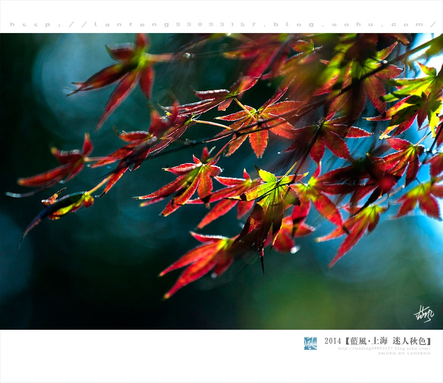 【上海】在初冬的公园欣赏的深秋绚丽美景 - 蓝风 - 蓝风的图像家园