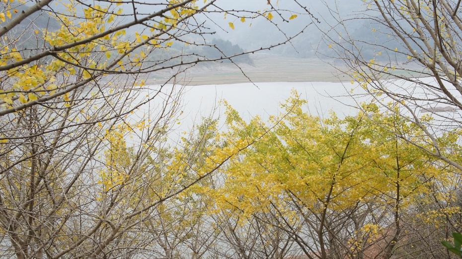 桂林漠川:诱人的银杏黄 - 余昌国 - 我的博客