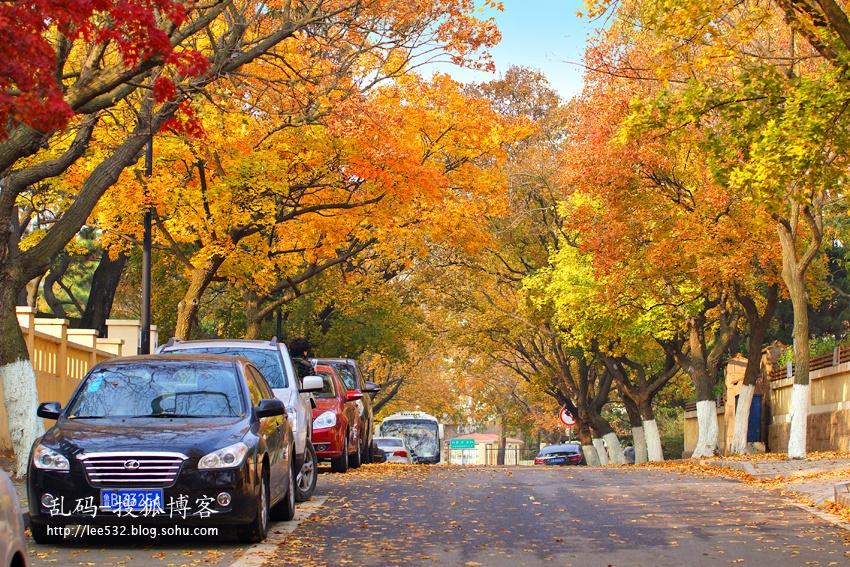 青岛最美赏秋地:八大关浪漫风景美到极致 - 海军航空兵 - 海军航空兵