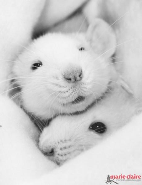 florence用镜头记录下自己可爱的萌宠——一只叫做bug的仓鼠的日常